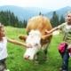 Sommerurlaub am Berg Klippitztörl in Kärnten - Übernachtung im Hotel Hochegger